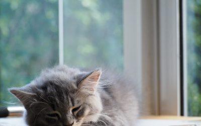 6 Bad Habits Ruining Your Sleep