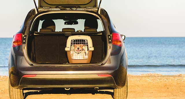 Make Your Pet Familiar With The Crate